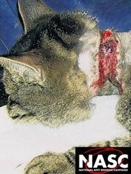 Cat injuries from fox snare