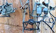 Traps and illegal snares found