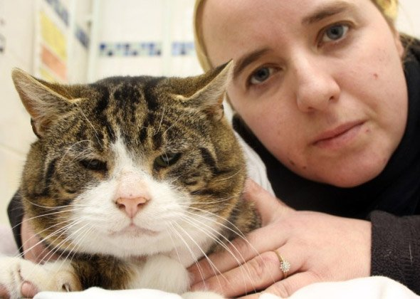Herby the cat found badly injured - Croft Vets Bolsover