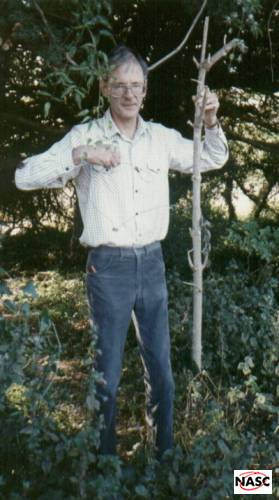 Deer snared and killed by snare. Several snares around a pheasant pen nearby. They were illegal self-locking, and attached to flimsy poles. Kingly Vale, Sept 1996