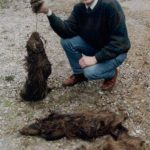 Chris Peacock, North Riding Badger Group, with an entire badger family wiped out by snares, Boltby, near Thirsk, North Yorkshire. All dumped in a river to hide evidence. One had tongue severed and bottom jaw ripped off. Photo: Darlington Northern Echo. 16th April 1994