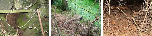 Snares on grouse moors