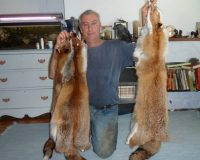 Petition to ban snaring for the fur trade in Wales