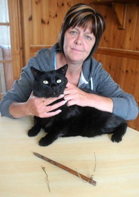 Cat Disco - snares victim