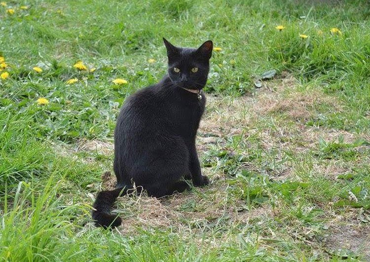 Sapphire the cat who died after getting caught in a snare.