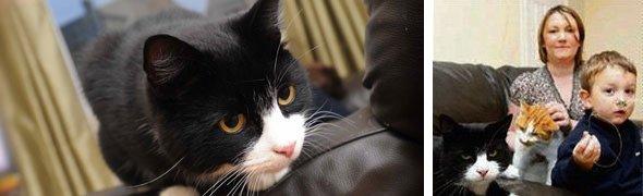Snared cat horrific incident