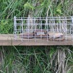 Fenn Trap on a Grouse Moor