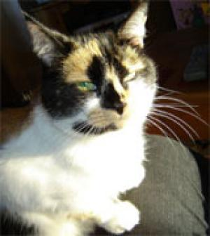 Holly the cat killed by snares