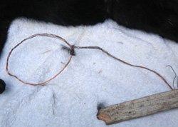 Illegal snares often kill or maim pets
