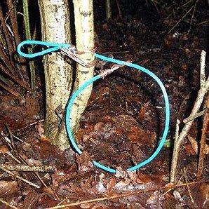 rabbit snare left in park
