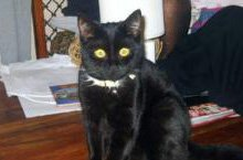 Shadow the cat was caught in snare