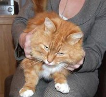 Snare left cat in agony
